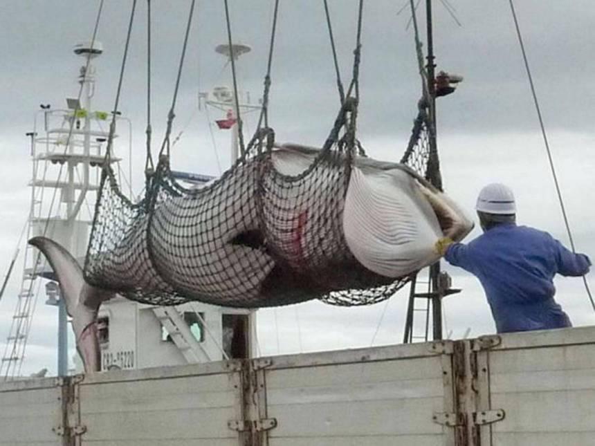 23-Whaling-AP