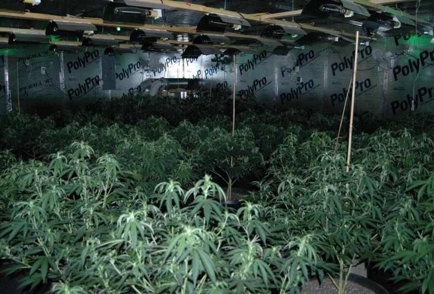 daniel-road-marijuana-grow-1-1.jpg