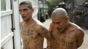 MS-13-gang-members-released