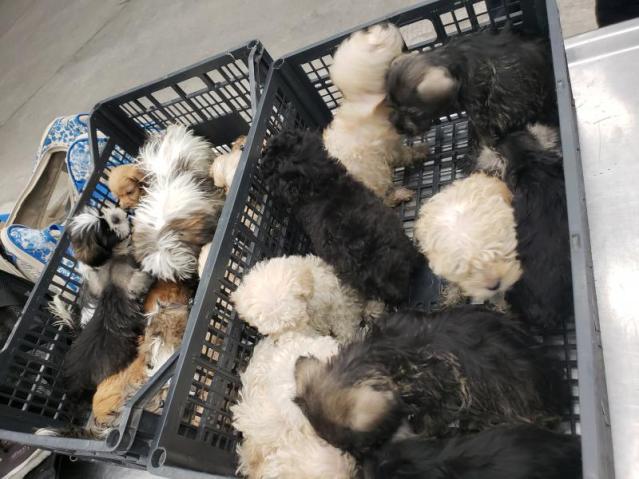 undeclared puppies2LRD92318.jpg